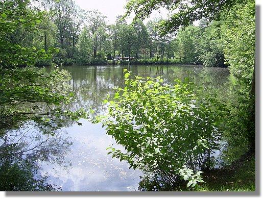 Waldbad teich angelgew sser des asv dalbke e v for Fischarten im teich